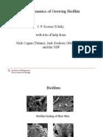 Biofilm Dynamics