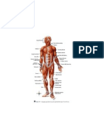 Lezione 6 Apparato Loco Mot Ore e Sistema Nervoso - 10.11.11