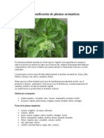 Clasificación de plantas aromáticas