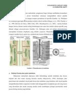 komunikasi sel tumbuhan