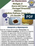 Oomycota y Myxomycota