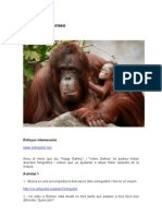 Activitats Borneo 1