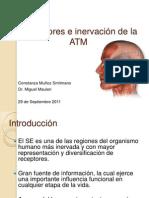 Inervación y receptores de la ATM