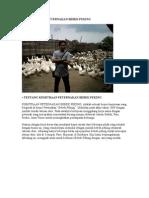Peluang Bisnis Peternakan Bebek Peking