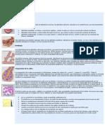 glandulas salivaless