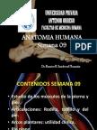 ANATOMIA SEMANA 09
