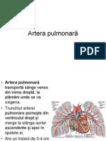 Prez 2 Sistemul Arterei Pulmonare