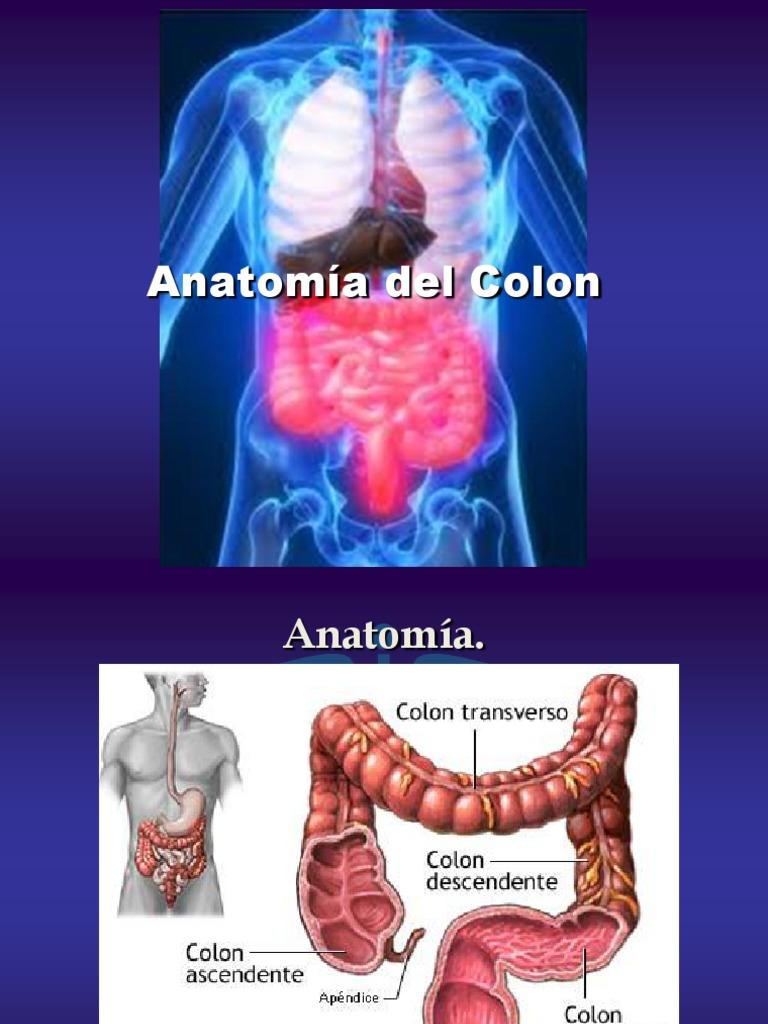 1 Anatomia Del Colon Listoo- Eduardo Alvarez