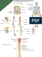 Roteiro 1 2 3 4 5 6 Aula de Anatomia MB1