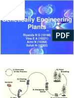 Genetically Engineering Plants
