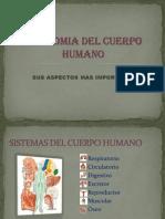 anatomiadelcuerpohumano