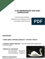 Reprod_aves