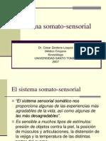El Sistema Somato-sensorial
