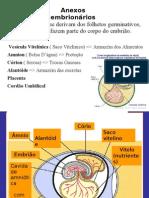 ANEXO EMBRIONÁRIO ALUNOS
