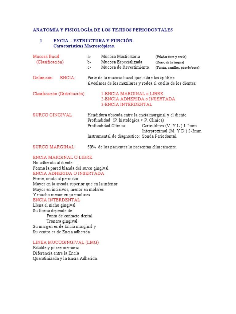 ANATOMÍA Y FISIOLOGÍA DE LOS TEJIDOS PERIODONTALES (2)