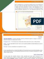 05_sistema_respiratorio