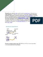 Neuroni Si Celule Gliale