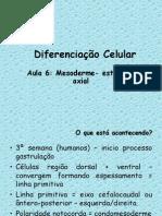 aula 6 Diferenciação  mesoderma