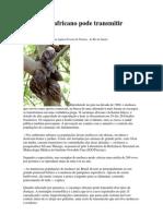 Caramujo africano pode transmitir doenças