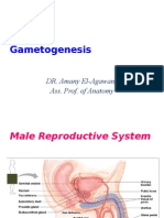 1. Game to Genesis I-My Lecture