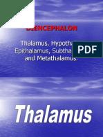 diencephalon