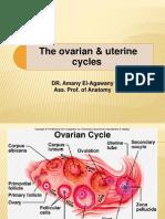 Ovarian and Uterine Cycle -My p