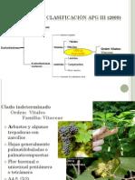 7ma Clase Orden Caryophyllales y Vitales