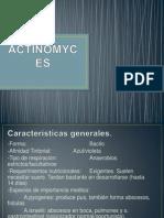 actinomycess