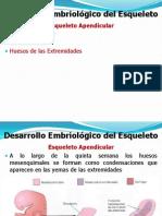 Embriologia ALAN Esqueleto Apendicular