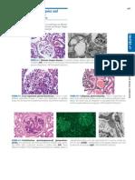 Atlas Urinary Sediments Renal Biopsies