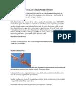 FRIGOCOLANTA Y PLANTAS DE CÁRNICOS