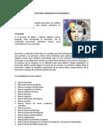 Concepto Empresarial-creatividad e Innovacion