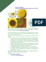 Fractales y Series de Fibonacci en La Naturaleza