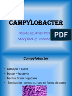 Campy Lob Acter