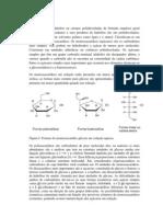 bioq - carboidrato