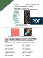 materialgenticoycromosomas-cariotipo-110306152050-phpapp01