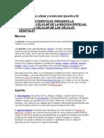 Biolodia Celular y Molecular Practica 6