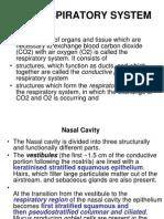 Respiratory System ( 3/11 )