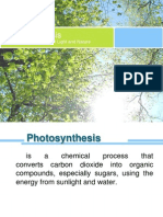 Photosynthesis (Light Dependent and Calvin Cycle)