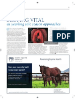 Scone Equine Hospital article in November 2011 BLUEBLOODS magazine