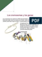 cromosomasygenes