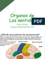 Organos de Los Sentidos Clase 1