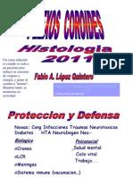 Plexos_Coroideos 11