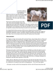Breeds of Livestock - Ongole Cattle