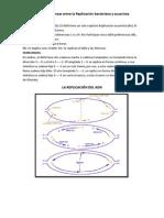 Diferencias y Semejanzas entre la Replicación bacteriana y eucariota