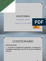 Anatomia craneo1