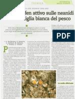 Cocciniglia_del_pesco_Vittone_IA_N_13