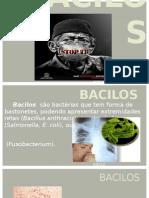 Bacilos