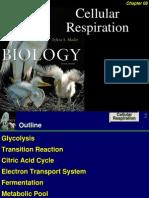 62744282 Cellular Respiration (1)
