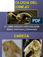 3. Osteologia Del Conejo